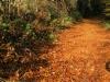Blätterweg-1