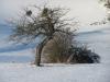 l-grasellenbach-2011-01-30-01